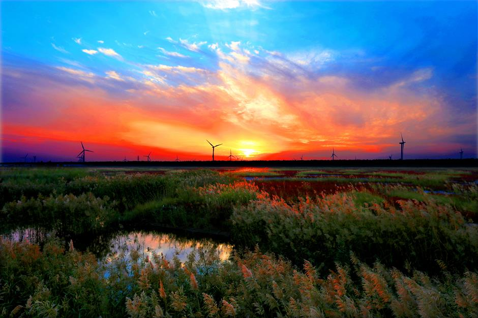 Dongtai City to cooperate with Shanghai in tourism, agriculture