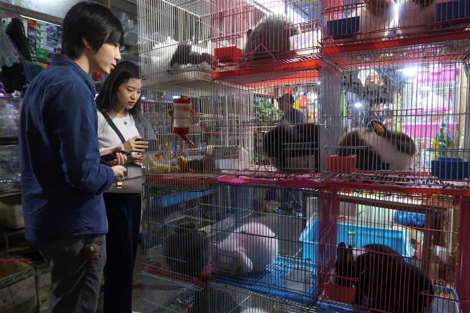 Marketing China's pet culture