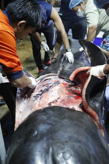 Whale dies after eating 8kg of plastic rubbish