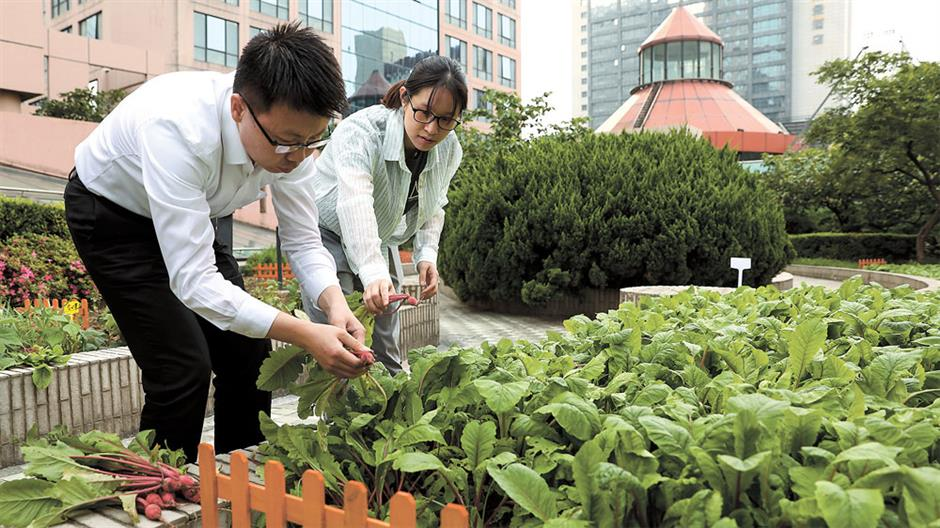 Rooftop vegetable garden takes root