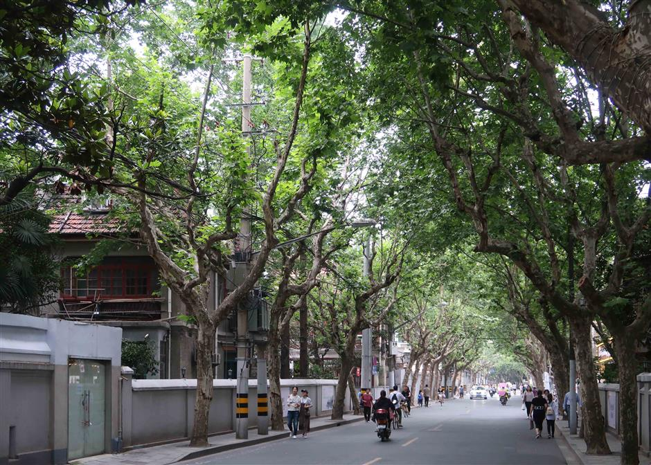 Lined with plane trees, a street steeped in history