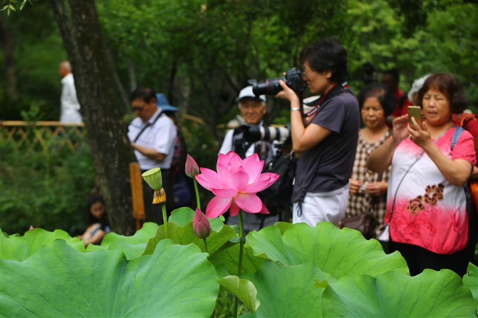 Guyi Garden blooms with lotus-lily exhibition