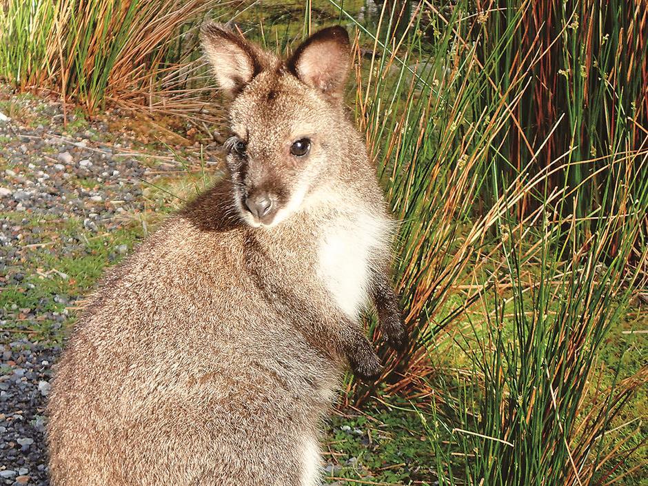 Discover Australia's natural treasure