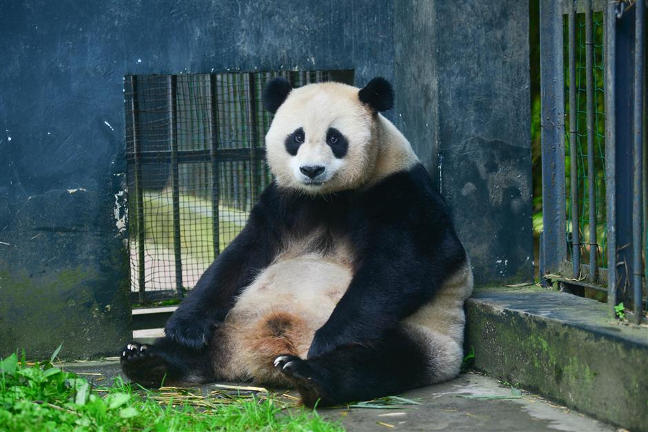 First panda twins born to wild and captive parents in China