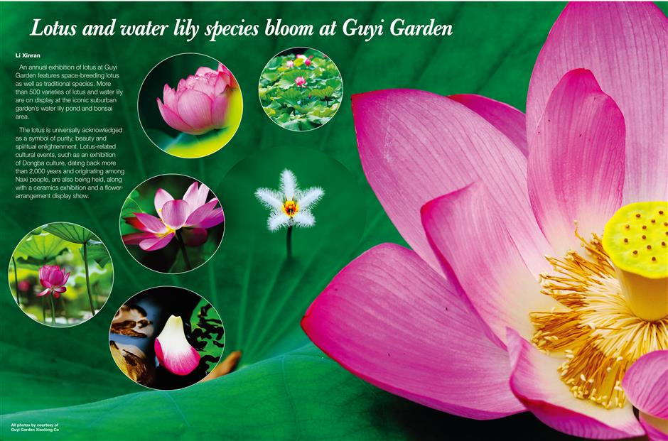 Lotus and water lily species bloom at Guyi Garden
