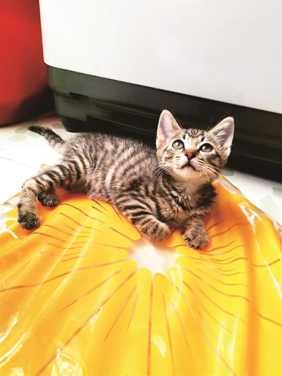 Hui Hui the Cat