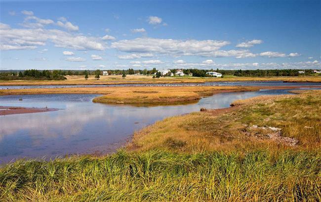 Worming way to unclogging waste wetlands