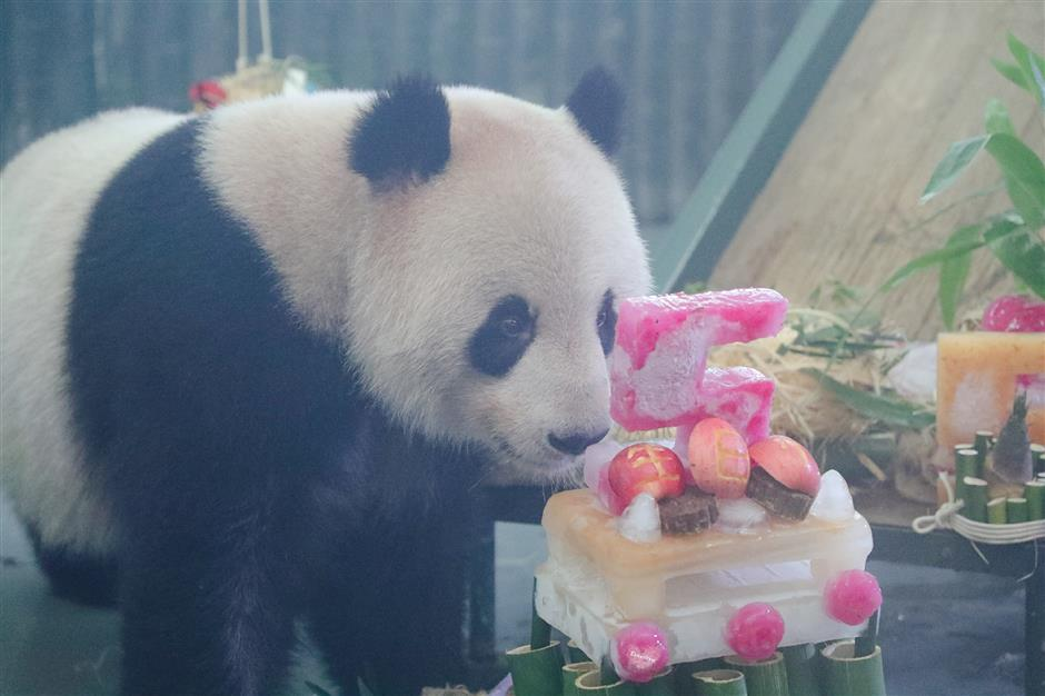 Zoo's fond farewell to grown-up bossy boy