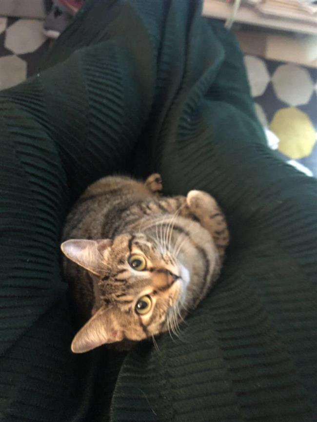Antonia Marie the Cat