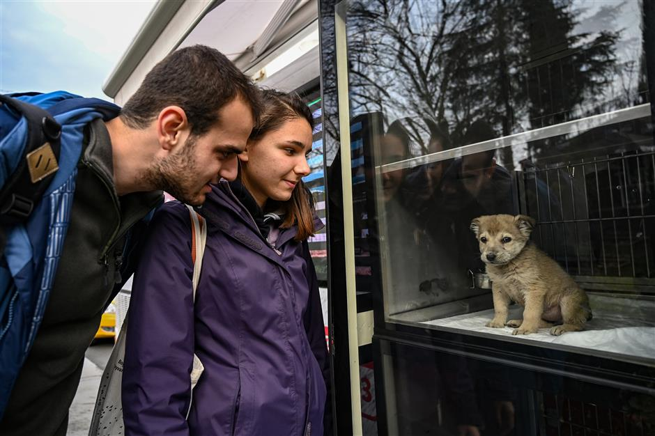Learning to coexist with Istanbul's strays