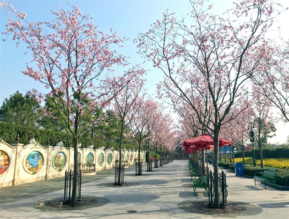 Shanghai Disney Resort blooms for peak travel season