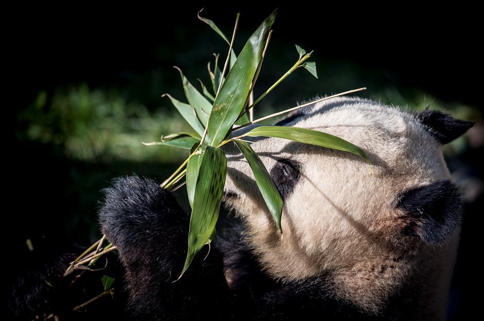 Danish Queen opens Copenhagen Panda House