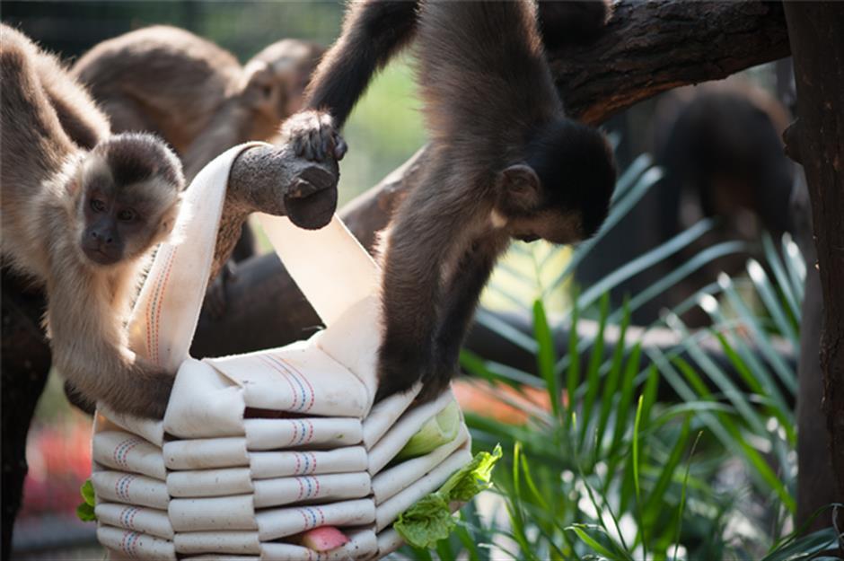 Stop feeding the animals, says zoo