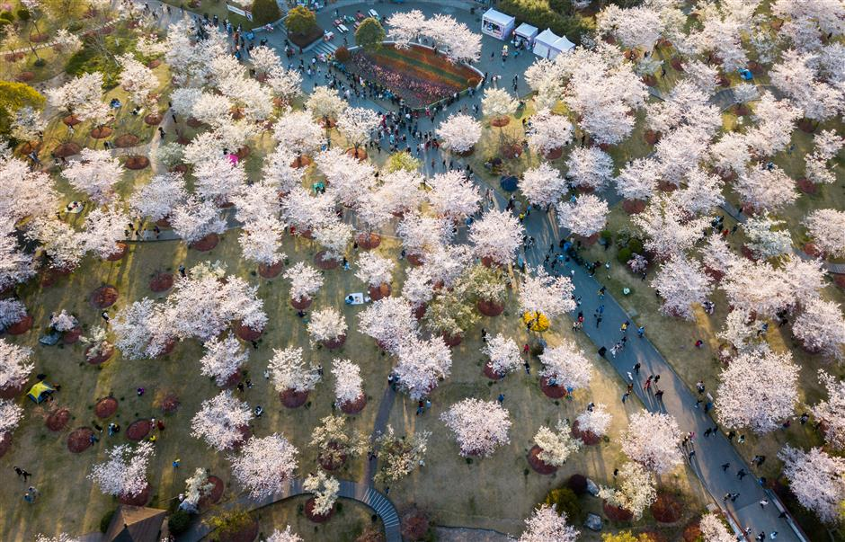Where to see colorful spring blossoms