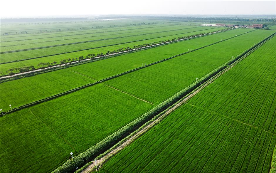 Chongming's land is ready for investment from all over the world