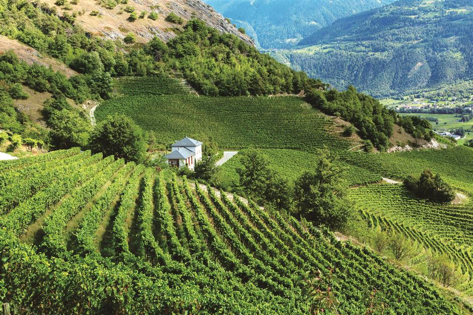 Elevated beauty of Swiss wines