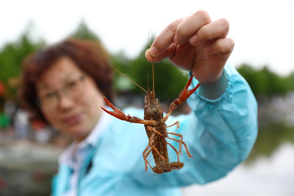 It's crayfish time in Baoshan