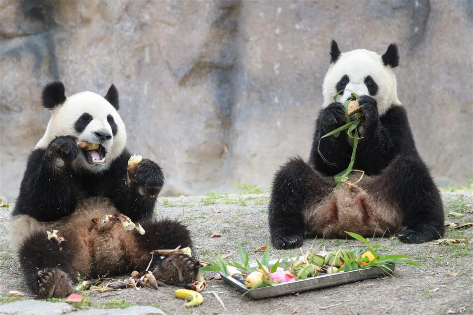 Zoo treats animals to festival dumplings