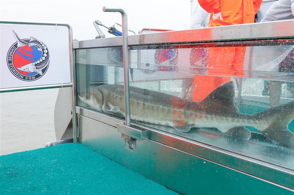 Largest-scale fish release