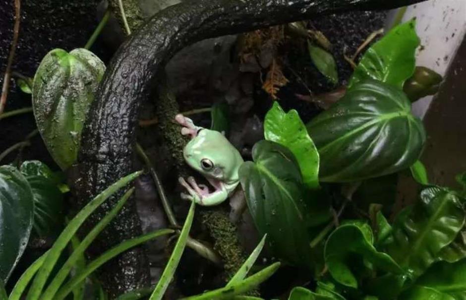 Creature comforts at Shanghai Zoo