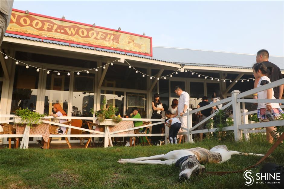 Animal farm: Local restaurants warming up to pets