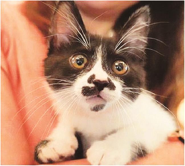 Little Bean the Cat