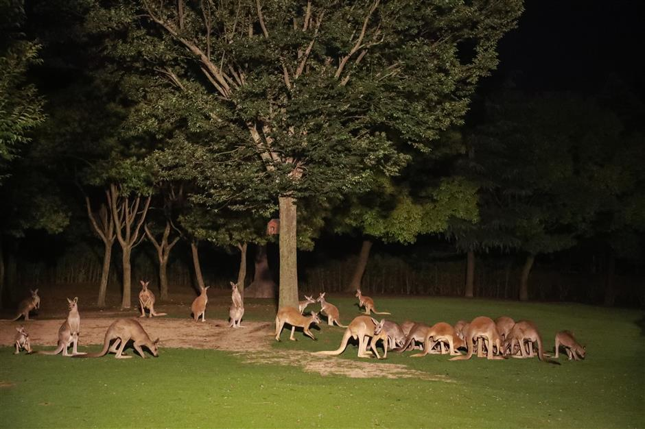 See animals at night