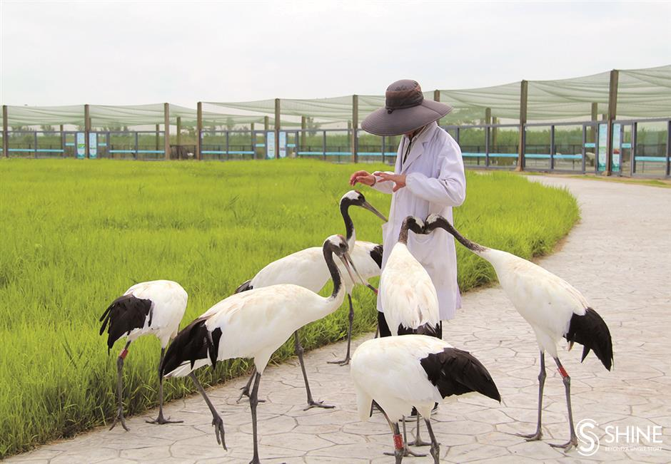 A bird sanctuary of 'global importance' to wildlife protection