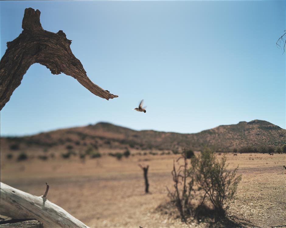 Fleeting moment of birds' presence captured in photographs