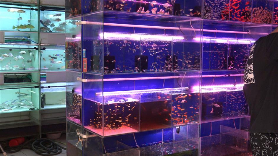 Customs probe aquarium traders