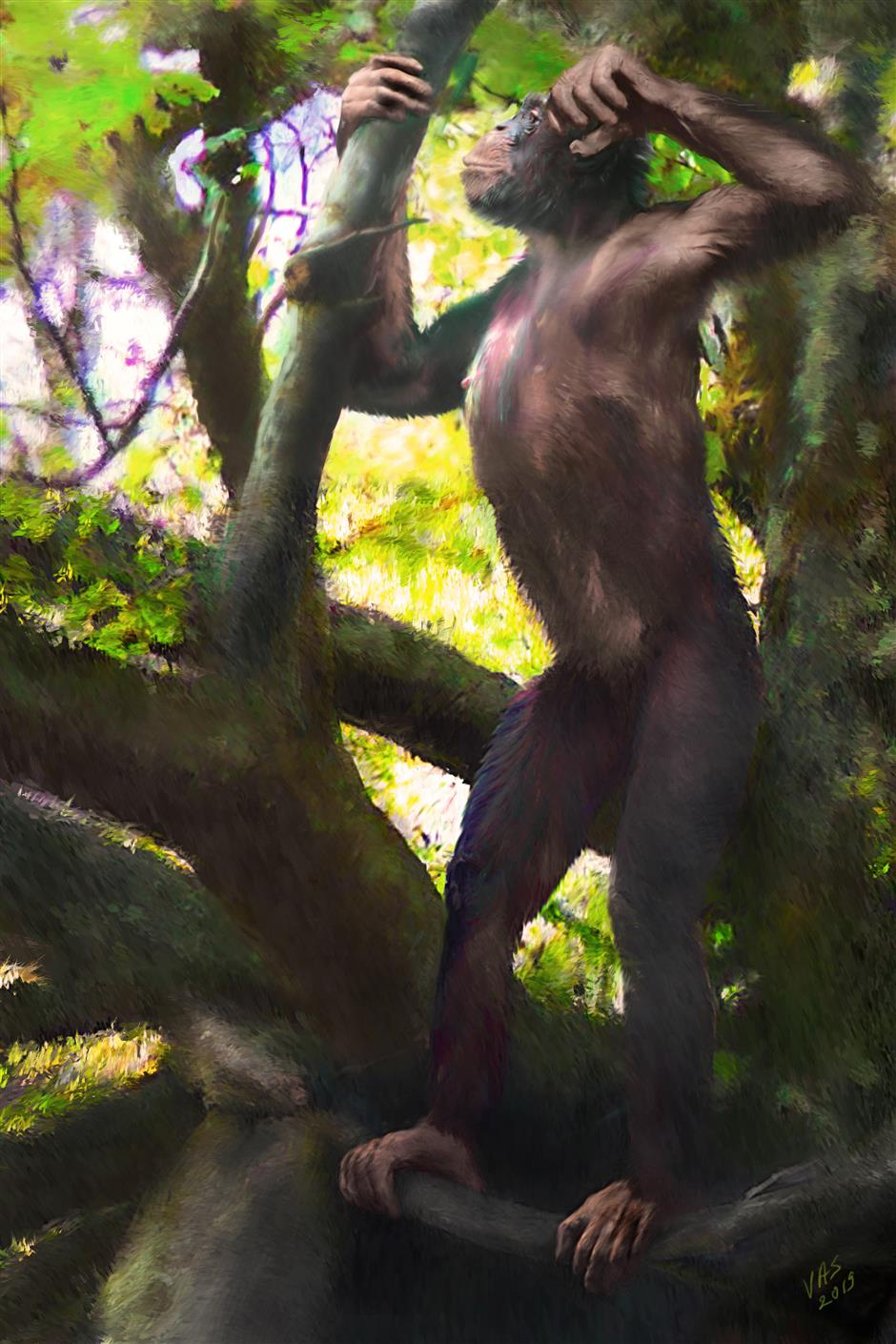 Scientists find oldest upright ape in Germany