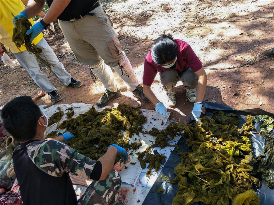 Thai plastic addiction: Deer dies after eating 7kg of bags