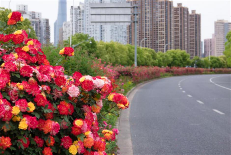 City lists its most beautiful roads
