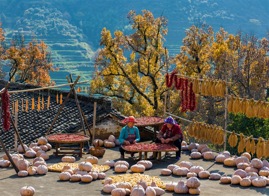 Snap! Policy helps record beauty of rural China