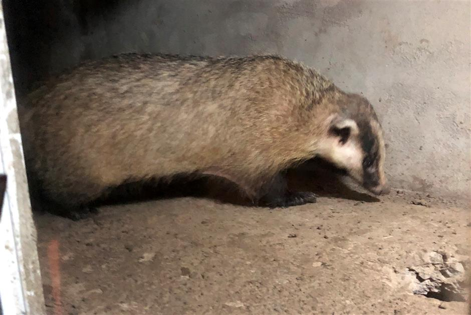 Work stops for city's biggest mammal