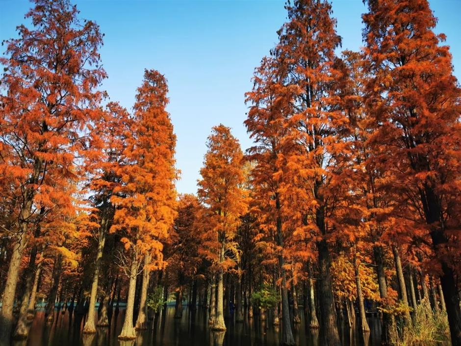 Tree map lays out autumnal panoramas