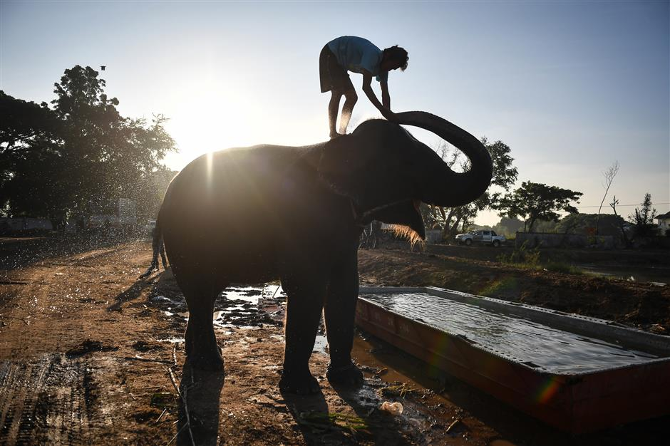 It's 'taming with torture' for elephants in Thailand