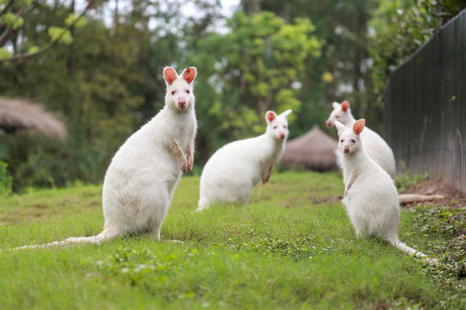 Wild animal park marking Year of the Rat