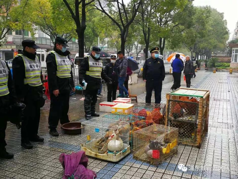 City crackdown on the live poultry trade