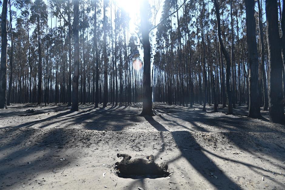 Australian bushfires extinguished, but climate rows rage on
