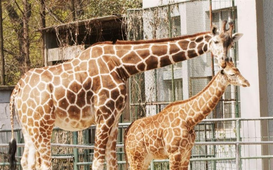 New life at the zoo as more parks reopen