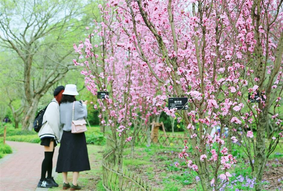 International flower show delayed until April