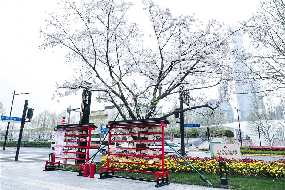 Bund Finance Center fills cherry blossom season with cultural offerings