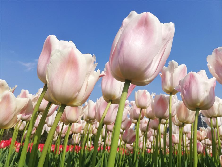 Springtime brings promise of renewal in Jing'an