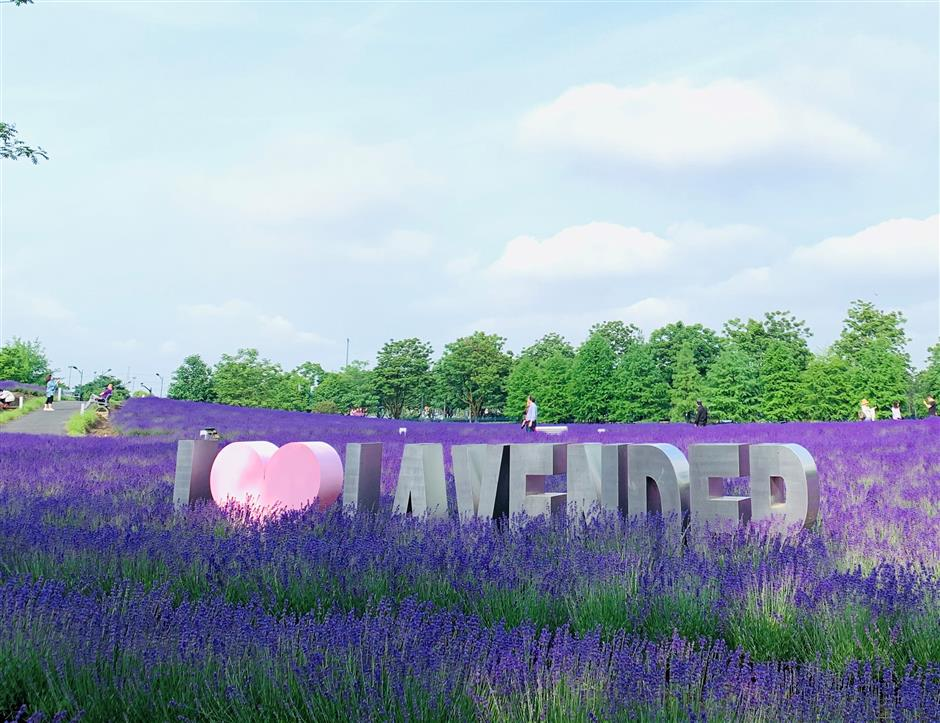 Park kicks off two-month lavender festival