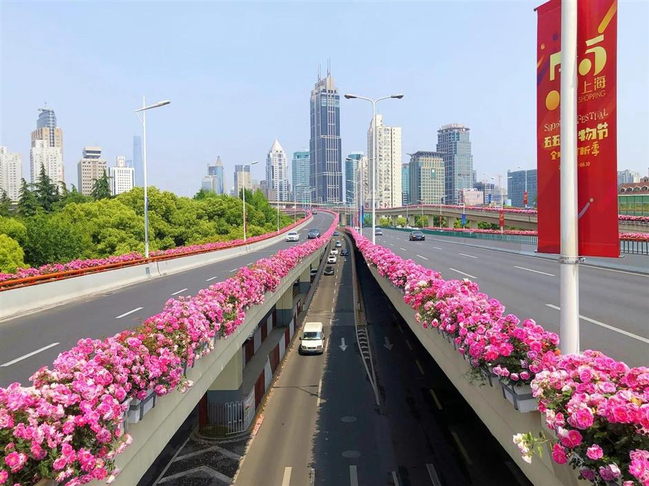 Chinese roses decorate city's elevated roads