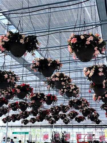 10th flower expo countdown springs into life