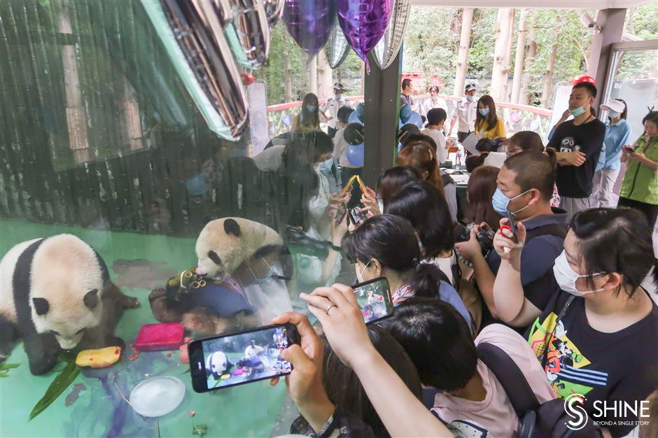 Zoo pulls out stops for panda birthday bash