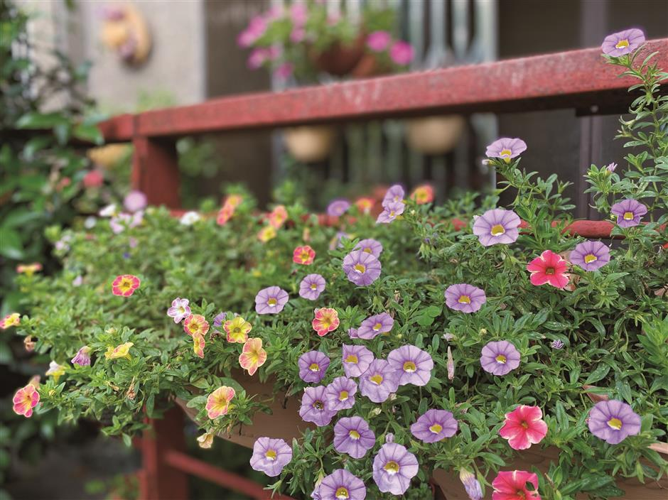 Gardeners bring new life into courtyards