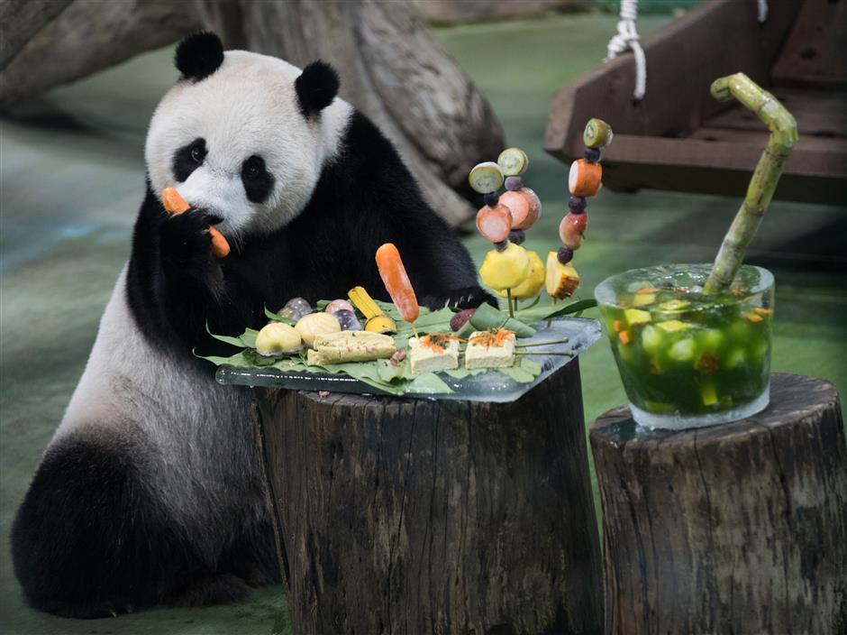 Taiwan, mainland fans celebrate Taipei-born panda's birthday